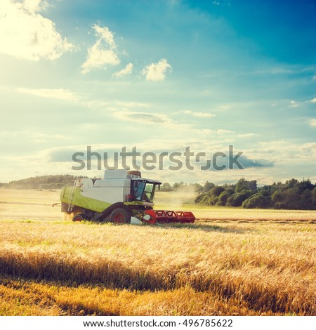 Working Harvesting Combine in the Field of Wheat. Farmland Background. Agriculture Concept. Toned and Filtered Photo with Copy Space. #496785622