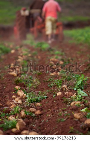 working in potato field with old crawler