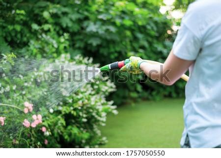 Working watering garden from hose. Hand garden hose with water spray, watering flowers, close-up, water splashes, landscape design