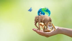 World Animal Day, Wildlife Day concept. Saving planet Earth, protect nature reserve, protection of endangered species and biological diversity. Elephant, tiger, deer, parrot in hand and butterfly.