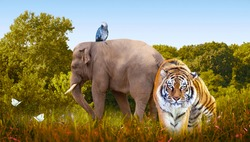 World Animals Day or Wildlife Day theme. Elephant, tiger, parrot, butterflies in nature reserve. Saving planet Earth, protect wildlife sanctuary, protection of endangered species, photo safari concept