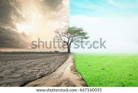World changed concept: Half drought and half abundance tree standing landscape background.
