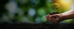 World environment day and save environment concept, close up hand holding soil with seedling plant or small tree with dark ground, save and protect earth concept