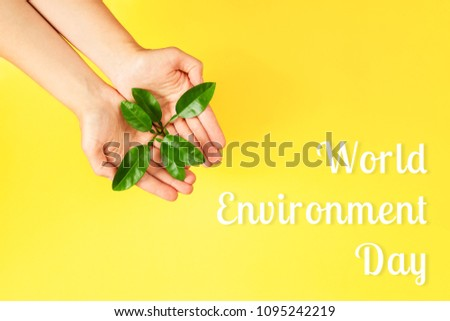 World Environment Day card. Female hands holding green plant on yellow background. Ecology concept. Place for text. #1095242219
