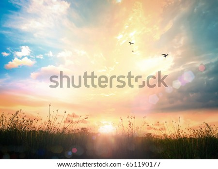 World environment day concept: Beautiful meadow sunrise wallpaper background