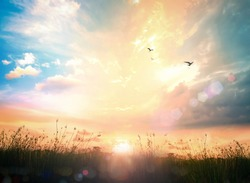 World environment day concept: Beauty morning meadow and sky sunrise wallpaper background
