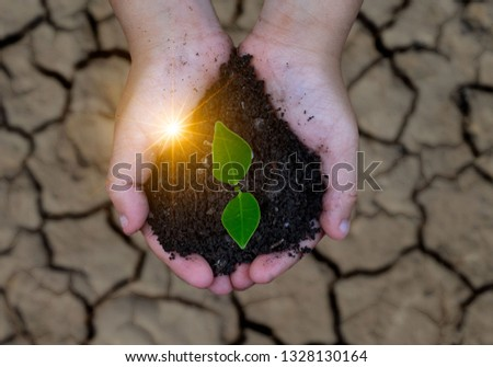 Hands watering green plants  The plant growth  Closeup plant
