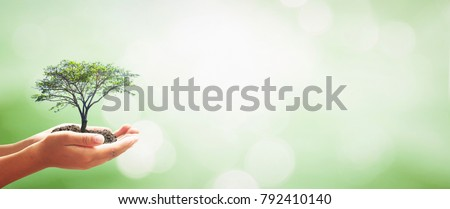 World environment day concept: Human hands holding big growth plant over green forest background #792410140
