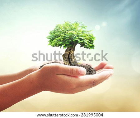 Shutterstock World environment day concept: Human hands holding big tree over blurred abstract beautiful nature background