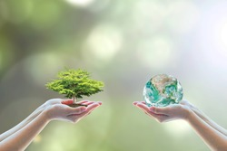 World environment day concept with tree planting and green earth on volunteering hands for ecological sustanability, environmental saving, CSR, ESG awareness. Element of the image furnished by NASA