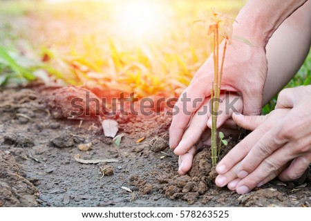 World environment day reforesting eco bio arbor CSR ESG ecosystems reforestation concept.Image of hands of father and daughter child growing tree on soil. Parent and child planting nature together. #578263525