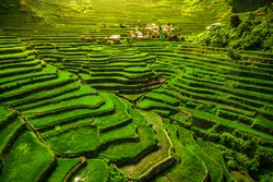 World heritage Ifugao rice terraces in Batad, northern Luzon, Philippines.