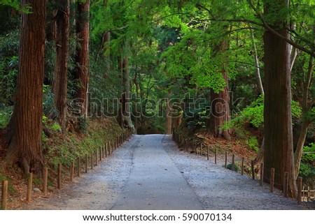 World Heritage site leaves around chuson-ji Temple #590070134