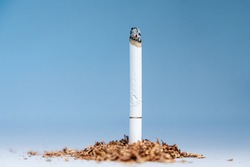World Tobacco Day. One smoking cigarette stands in a pile of tobacco on a gray background. Copy space. The concept of nicotine addiction and smoking cessation.