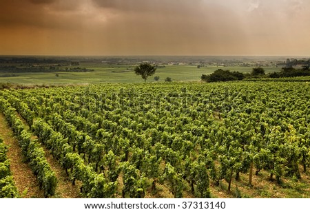 Worldwide famous Vineyard in Burgundy