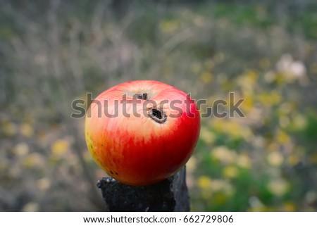 Photo of  Worm apple. Selective focus