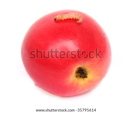 Worm creeping on red apple. Isolated on white