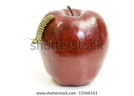 Worm (monarch caterpillar) and the apple