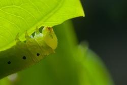 worm on green leaf