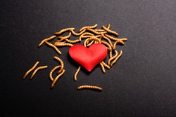 Worms devour the red heart of lost and rotten love.