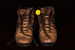 Worn leather brown ladies walking pair of boots with a yellow dandelion flower.