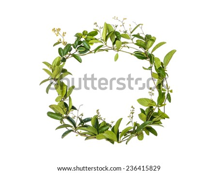 wreath of creeper flower isolated on white background, alphabet floral #236415829