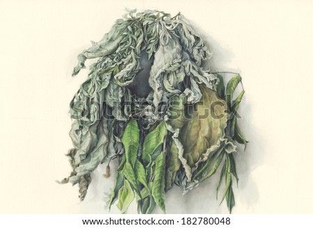 Wreath of leaves /Hand painted/  Watercolor illustration of green leaves braided in a wreath, against off-white background.