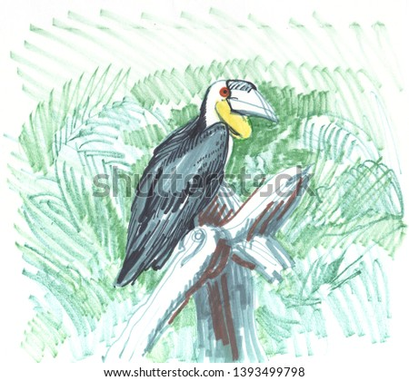 wreathed hornbill Rhyticeros undulatus, bar-pouched wreathed hornbill found in forests north-eastern India Bhutan, Southeast Asia, Greater Sundas. sketch markers, freehand drawing