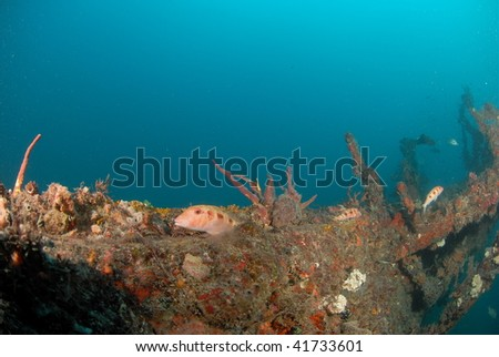 wreck diving - stock photo