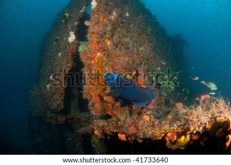 wreck diving with fish