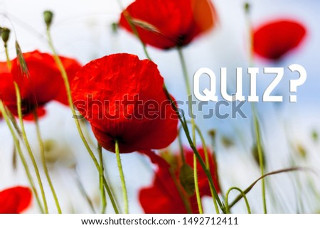 Writing note showing Quiz Question. Business photo showcasing test of knowledge as competition between individuals or teams Front view summer red color poppy flowers sky background.