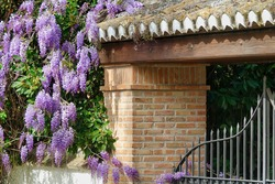 Wrought iron exterior door surrounded by purple wisteria flowers