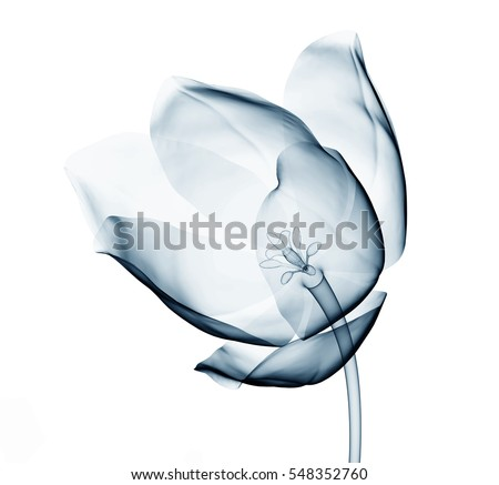 x ray image of a flower ...