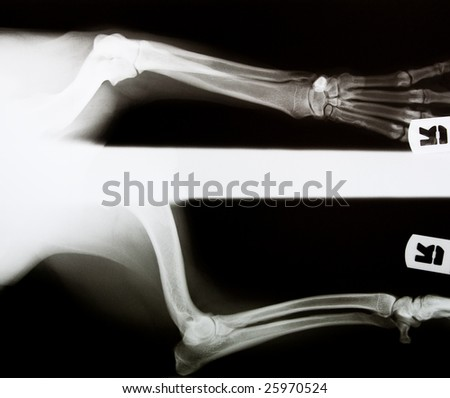 x-ray of a dog's leg