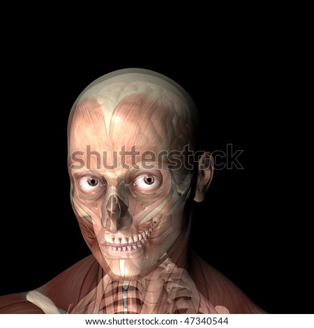 X-Ray of a male skeleton with his muscles and brain displayed.  Isolated on a black background