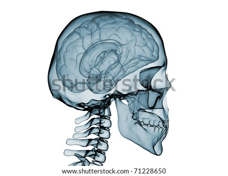 X-Ray of brain and skeleton.Isolated on white background