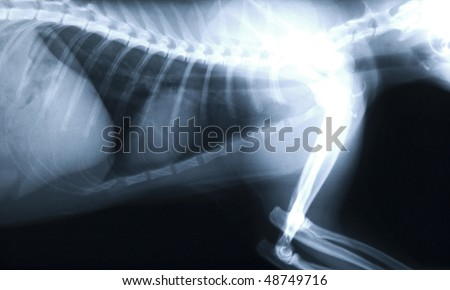 X-ray thorax cat