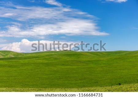 Xinjiang Ili Kalajun grassland, alpine grassland, alpine pasture
