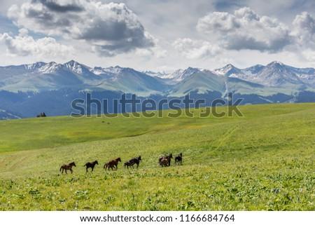 Xinjiang Ili Kalajun grassland, alpine grassland, alpine pasture #1166684764