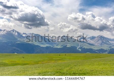 Xinjiang Ili Kalajun grassland, alpine grassland, alpine pasture #1166684767