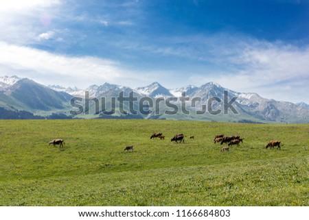 Xinjiang Ili Kalajun grassland, alpine grassland, alpine pasture #1166684803