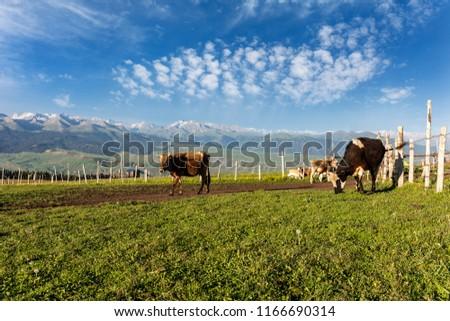 Xinjiang Ili Kalajun grassland, alpine grassland, alpine pasture #1166690314