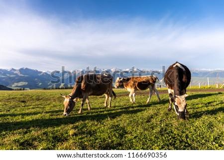 Xinjiang Ili Kalajun grassland, alpine grassland, alpine pasture #1166690356