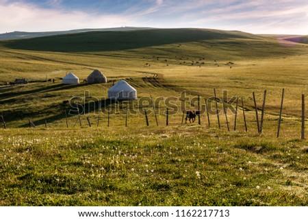 Xinjiang Karaqin grassland, alpine grassland, alpine pasture #1162217713