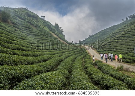 XITOU, TAIWAN - OCTOBER, 2014 - Tea plantation in the North East region of Taiwan in October, 2014. #684535393