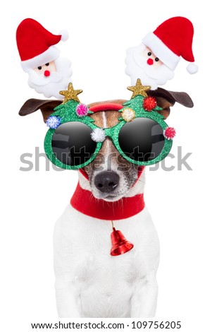 xmas dog with funny sunglasses