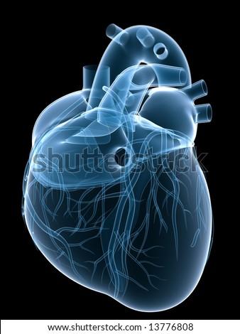xray heart