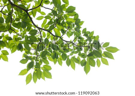XXXL: isolated Green leaf on white background