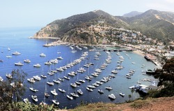 Yachts at Avalon Harbor, Catalina Island