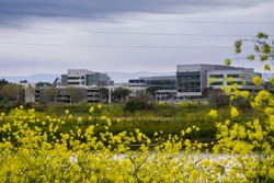 Yahoo office buildings on the shoreline of San Francisco bay on a cloudy spring day, wild mustard blooming on the levees, Sunnyvale, Silicon Valley, California